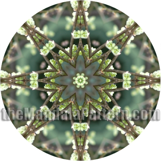 Buds of Spring Mandala
