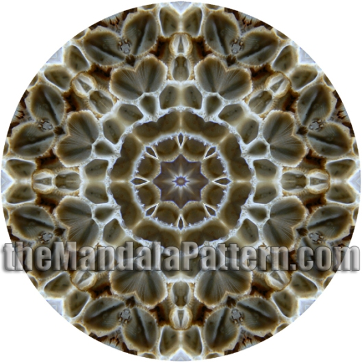 Barnacle On A Shell Mandala
