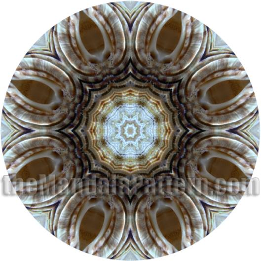 Shell 2 Mandala