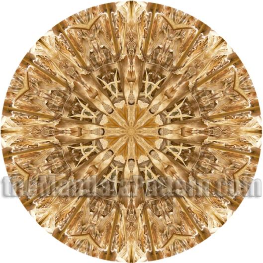 Last Corn Mandala