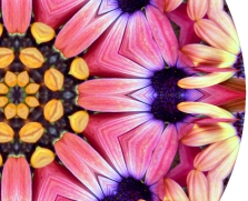 Flower Power Mandala - detail.  Click to enlarge.