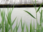 Grass by the Water - source image
