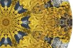 Lichen Mandala - detail