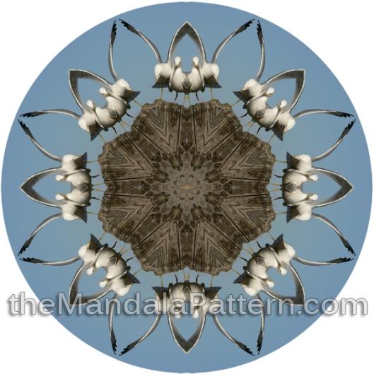 Seagull Mandala