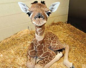 Baby Giraffe Mandala source image